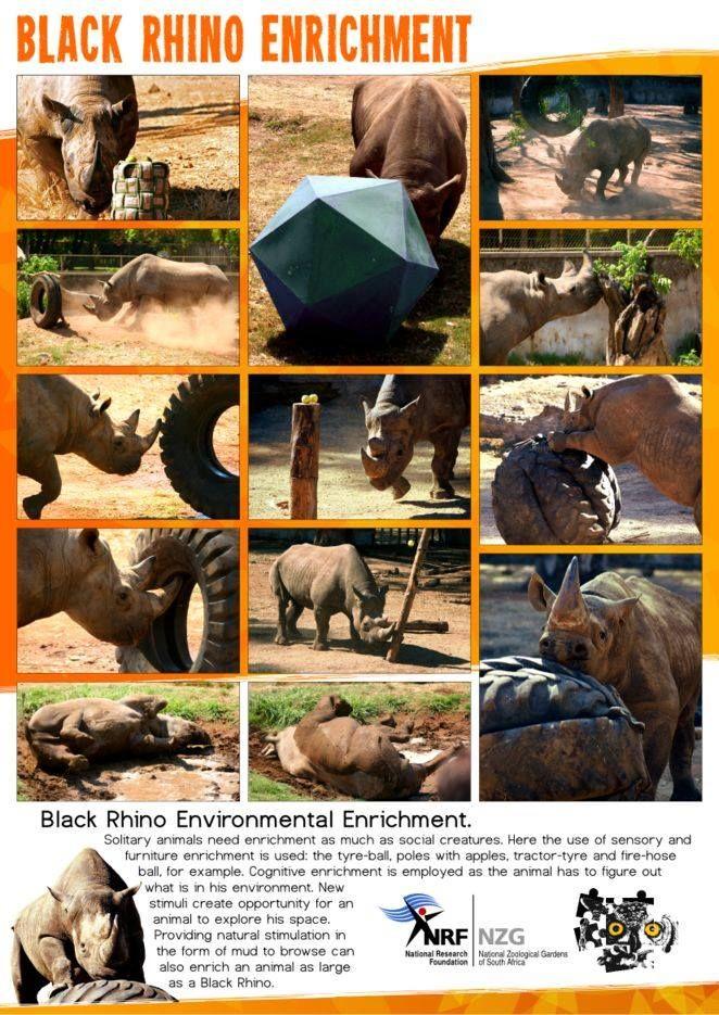 Black Rhino Enrichment