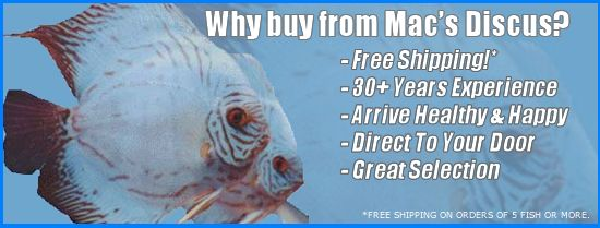 Mac's Discus Fish For Sale - Free Shipping & Live Arrival Guarantee!