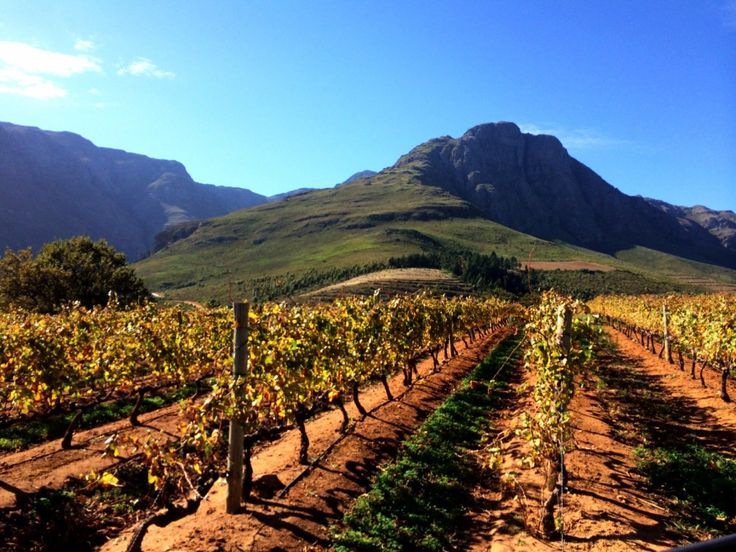 Stellenbosch Wine Country, South Africa