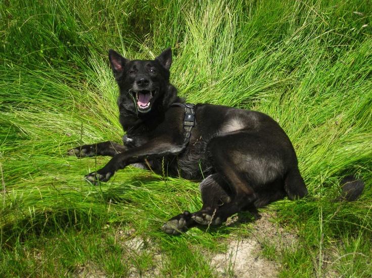 """Bobo the dog says: """"Now I am REALLY happy!!!"""" Il cane Bobo sta dicendo: """"Ora sì che sono DAVVERO felice!!!"""""""