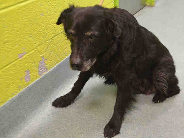 EASTWOOD - A1097855 - - Brooklyn  Please Share:TO BE DESTROYED 11/30/16 **NEEDS A NEW HOPE RESCUE TO PULL** -  Click for info & Current Status: http://nycdogs.urgentpodr.org/eastwood-a1097855/