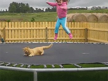 Make it stopppppp! Silly Cat GIFs | POPSUGAR Pets* / Click for more funny cats...