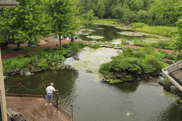 426 best images about swim pond on pinterest swim pools for Private fishing ponds near me