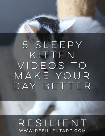 5 Sleepy Kitten Videos to Make Your Day Better