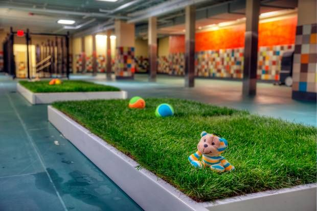 Pooch Hotel in Dallas features indoor grass