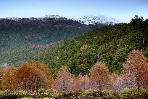 Colores de Antillanca - P.N. Puyehue (Patagonia - Chile)