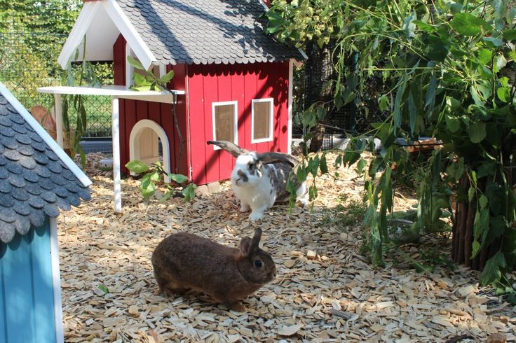 kaninchendorf kaninchen kaninchengehege und aussengehege