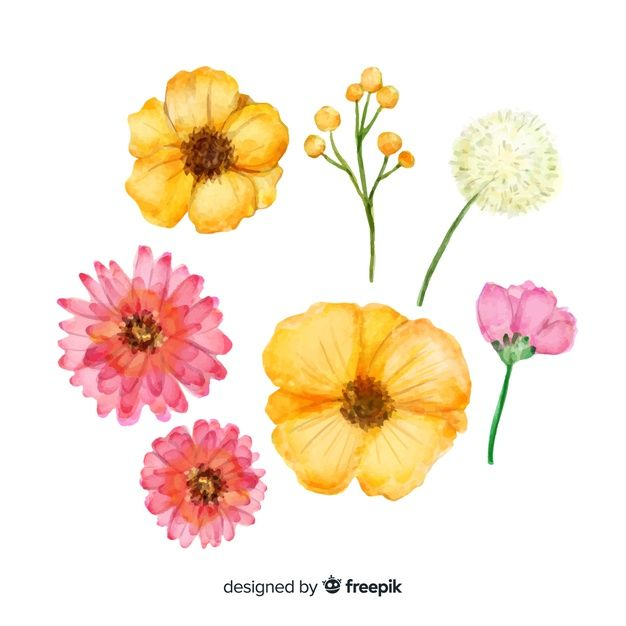Download Watercolor Spring Flower Collection For Free Spring