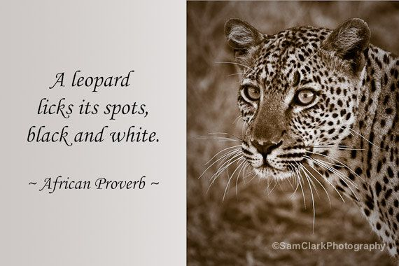 WILDLIFE PHOTOGRAPHY PROVERB - Quote, Wildlife Photo ...