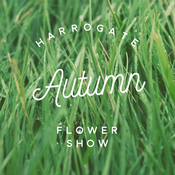 Checking out natural beauty at The Harrogate Autumn Flower  Show