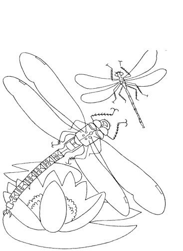 flowers and dragonflies coloring pages | 17 Best images about Dragonflies on Pinterest | Coloring ...