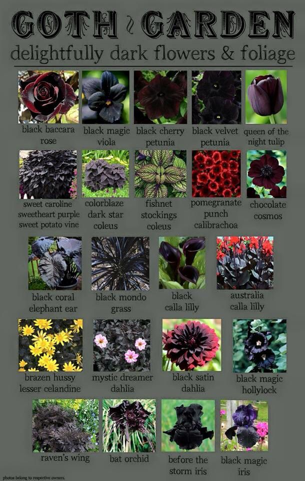 Or we could just call it dark foliage plants! A collection of potential plants.