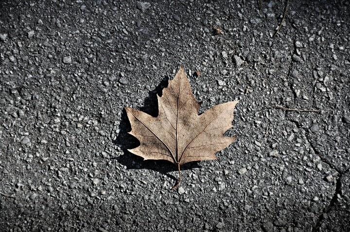 Autunno. Fall.