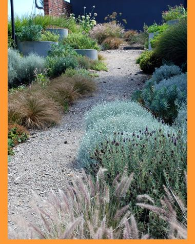 Jim Fogarty Landscape Design | Gardens | Flinders Coastal Garden gorgeous colours