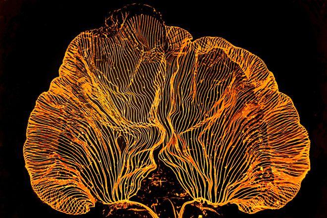 被写体がまったくわからない、不思議な顕微鏡写真:ギャラリー Page19 « WIRED.jp