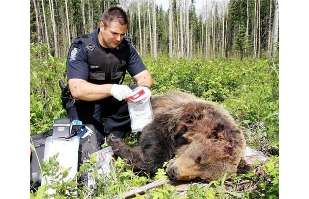 CSI: British Columbia Wildlife    Poachers, beware: B.C.'s Conservation Service Officers have access to the same techniques, the same labs and the same scientists that police officers use to catch crooks