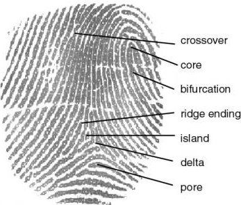 """heronswing:  Hey Crime Writers - don't just have your detectives say bland things like """"the fingerprints matched"""" - use correct terminology and make your writing precise. Here's a cool little fingerprint chart to get you started."""