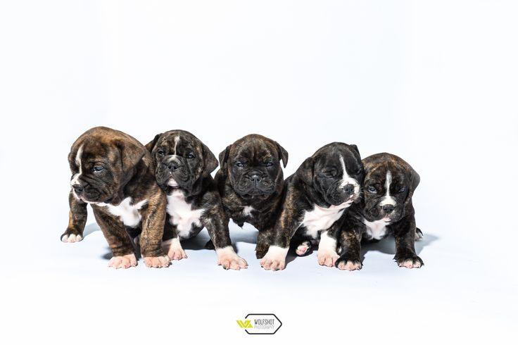 44 besten hunde spr che bilder auf pinterest hund spr che hunde und englisch. Black Bedroom Furniture Sets. Home Design Ideas