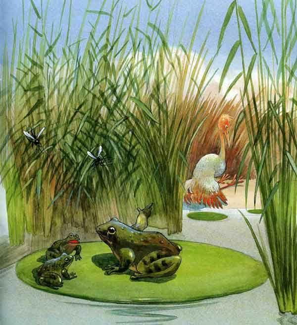 Картинки для детей лягушата на болоте