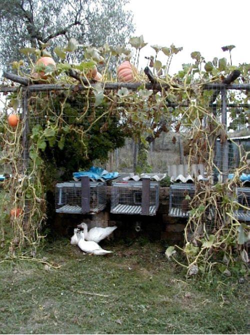 8077 besten small budget gardening bilder auf pinterest. Black Bedroom Furniture Sets. Home Design Ideas