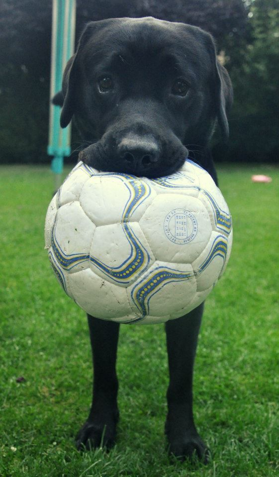 Ah! This reminds me of my Gracie girl!!! I miss her everyday! She loved to play soccer