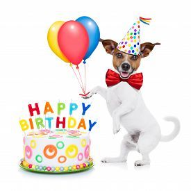 stock photo of happy birthday - jack russell dog as a surprise with happy birthday cake wearing red tie and party hat holding balloons isolated on white background - JPG