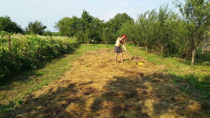A Tiny Farm - The Nursery - Transplanting some veggies