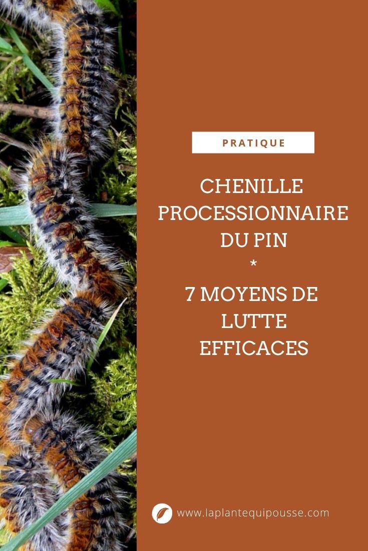 Chenille Processionnaire Du Pin 7 Moyens De Lutte Efficace Pour