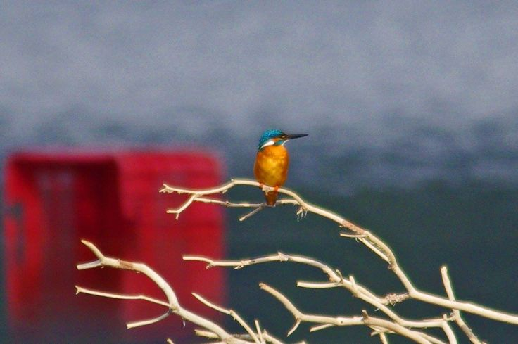 This little fellow is the King Fisher. A bird with wonderful colouring which you can see in Kefalonia. photo: Martyn Green