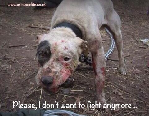 Ban Dog Fighting! Steve King, (R-IA) believes and fights to have dog fighting made legal in the USA. People like King need to be locked up. He has no business in congress representing anyone. // Maybe they should get people found guilty of cruelty to animals to fight it out gladiator style as their punishment instead of prison. Oh wait, that would be cruelty, and according to the men who commit these offences, that is only something we dish out to animals.