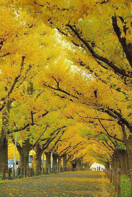 11 best going somewhere images on pinterest simple beautiful japan fandeluxe Gallery