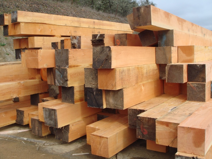 Images about douglas fir on pinterest