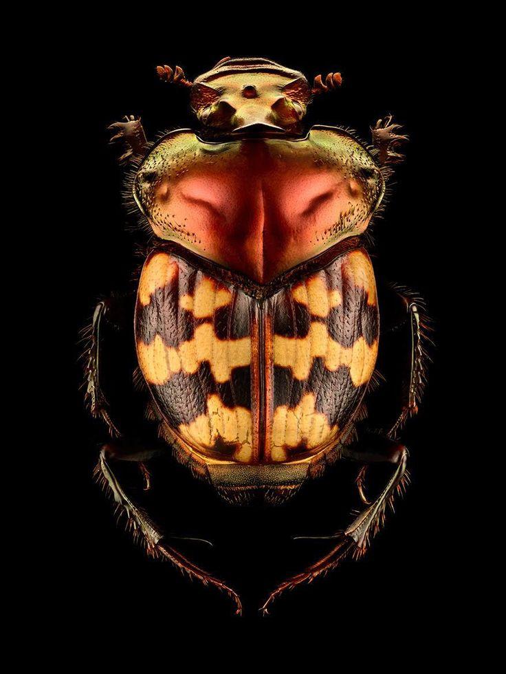 Des Photographies Macro composées de près de 10000 images montrent les Détails des Insectes (8)