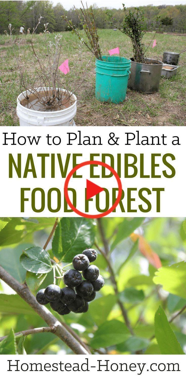 Essbare Garten Anfanger Essbaren Garten Food Forest Garden Food Forest Food Garden