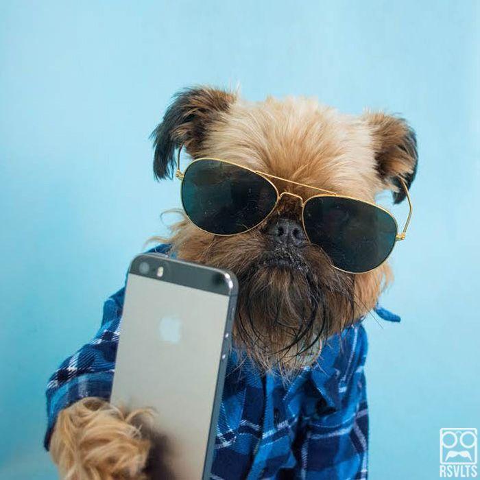 Señores están listos para empezar la reunión! selfie de un perro con lentes y iphone