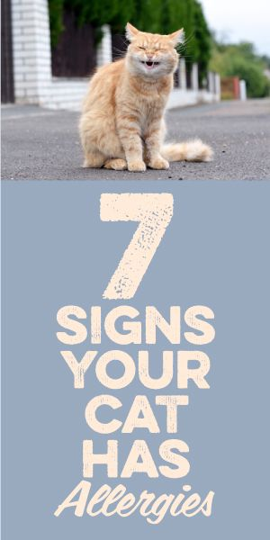 7 Signs Your Cat Has Allergies