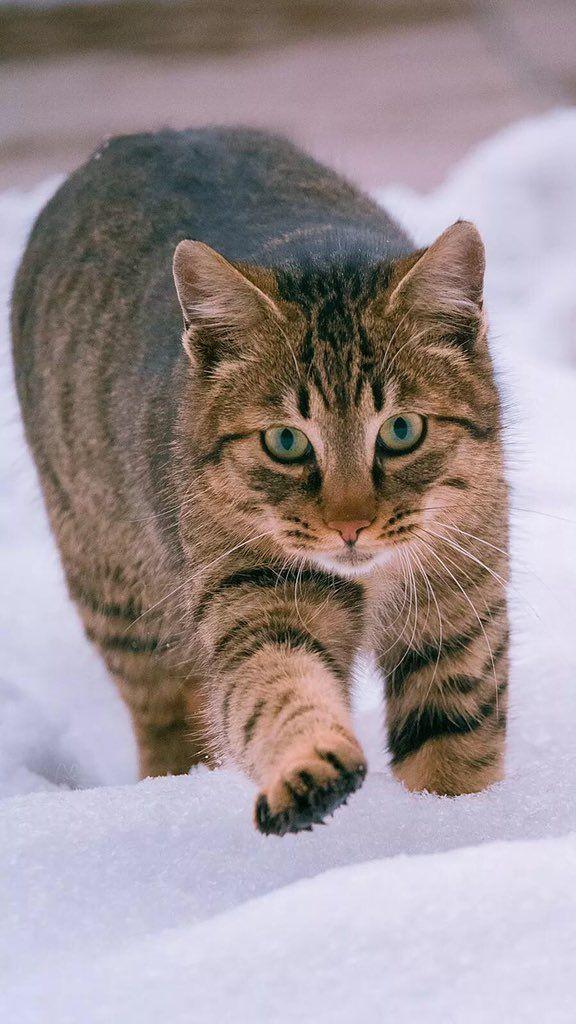 Curiousbot No 1106 On Grey Tabby Cats Grey Tabby Kittens Orange Tabby Cats