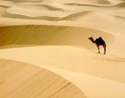 El desierto frío más grande del mundo lo forma el continente más elevado de la tierra: el Antártico o La Antartida.