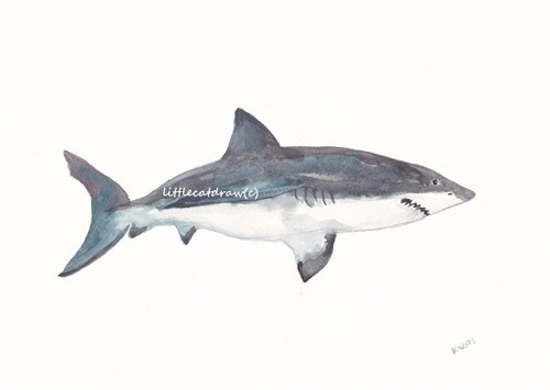 Great White Shark   Art Painting Watercolor PRINT
