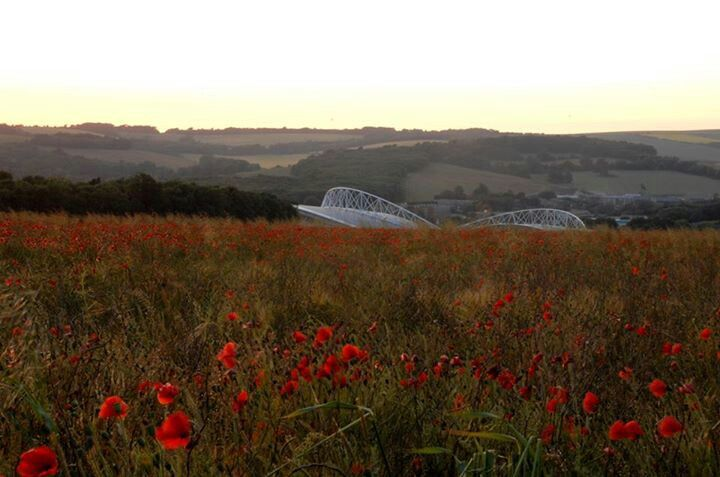 The american express community stadium behind the poppy field