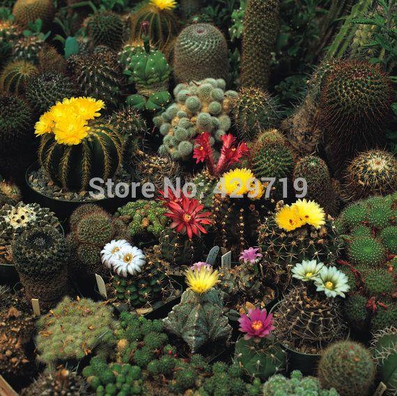 100/bag Cacti (Cactus Seed Mix) - Growing Cactus seeds is fun and rewarding!--Perennial