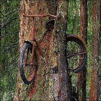 This may happen when you forgot to take your bike back from cycling in the forest....