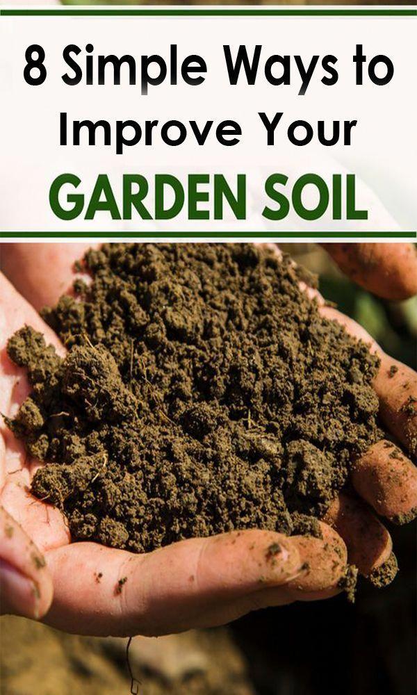 8 Simple Ways To Improve Your Garden Soil For Free In 2020 Garden Soil Organic Vegetables Soil Health