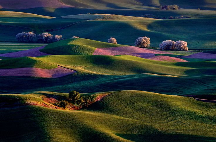 In Focus - The Atlantic: Photos, Rolling Hills, National Geographic, Rays Warm, Sunrise, Place, Palouse Country, Eastern Washington