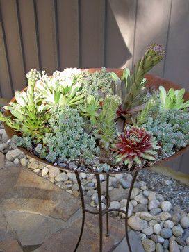 Succulents - Bliss Garden Design