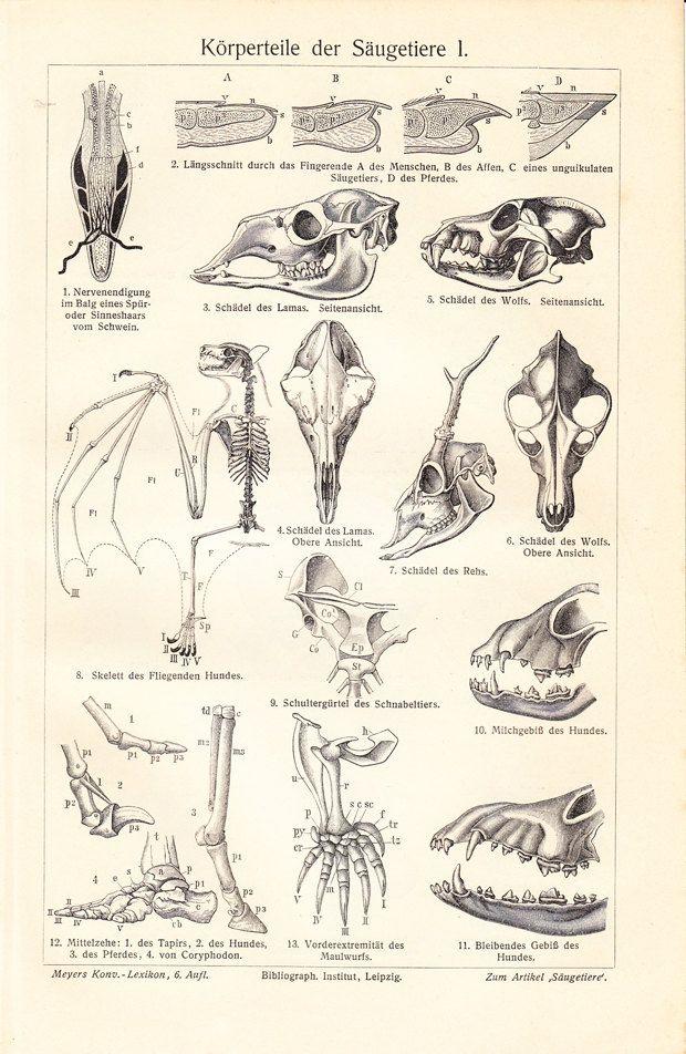 249 best Anatomy images on Pinterest | Animal anatomy, Drawing ...