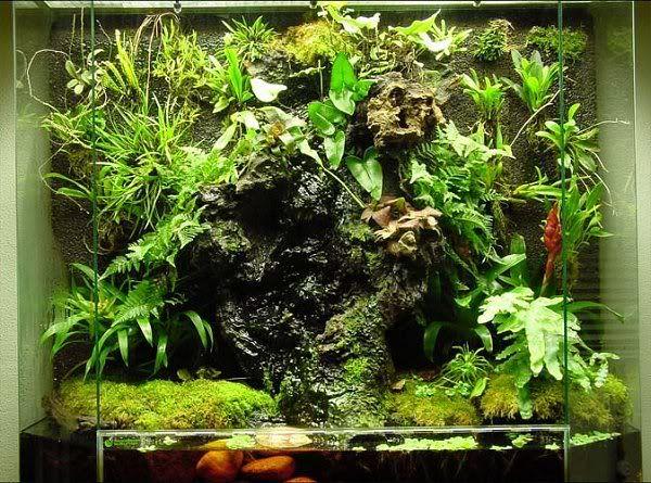 Great drip wall photo only no info aquarium vivarium - Begonia argentata ...