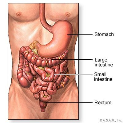 How Do The Intestines Work Digestive Health Health