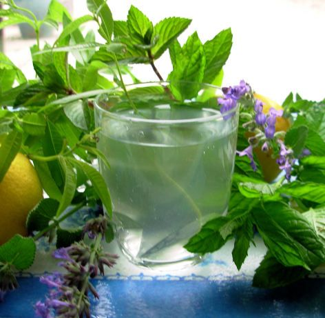 Lemon verbena: recipe for a refreshing and popular French tisane using dried lemon verbena and mint leaves