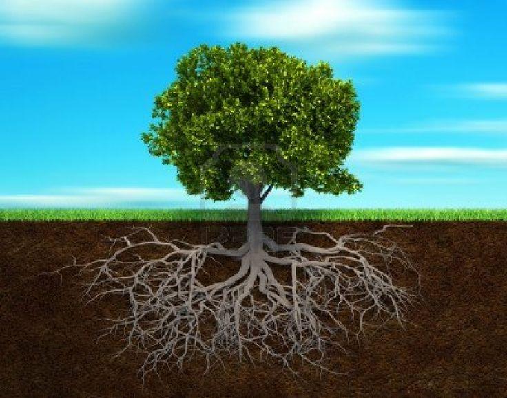 Sezione nel suolo, mostrando la radice di un albero - 3d rendering illustrazione Archivio Fotografico - 8041829
